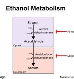 ethanol metabolism presence of decreased nad levels play a major role in altered metabolism [ 1035 x 873 Pixel ]